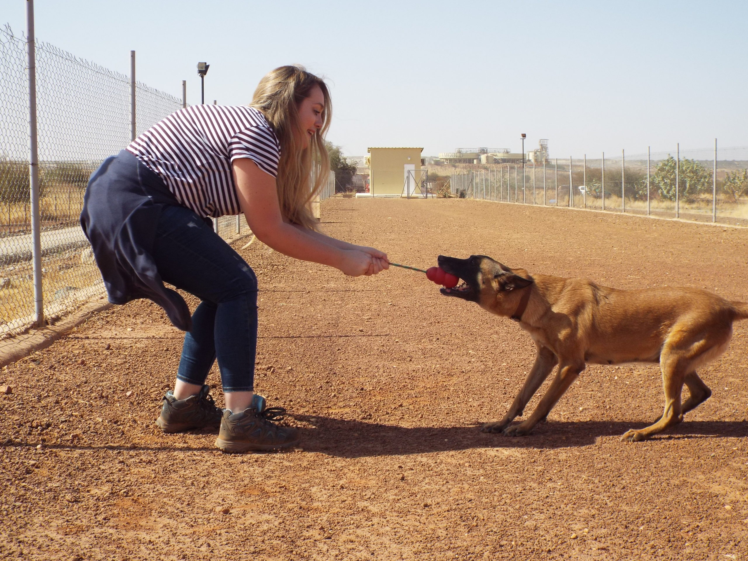 Project Executive Kelly experiencing bite training with SafeLane canines in Burkina Faso